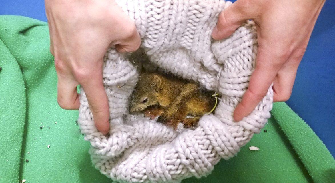 Kuva jossa oravanpoikanen on pipossa.