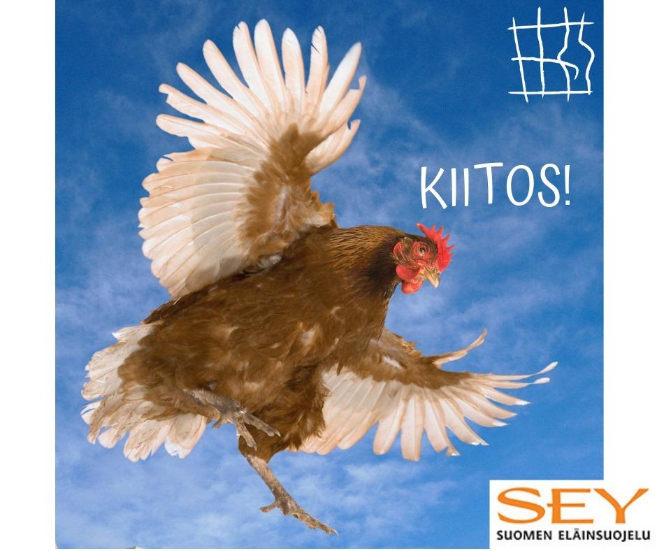 Kuvassa kana lentää sinisellä taivaalla. Lisäksi teksti KIITOS!, sekä SEYn ja End the Cage Age -kampanjan logot.