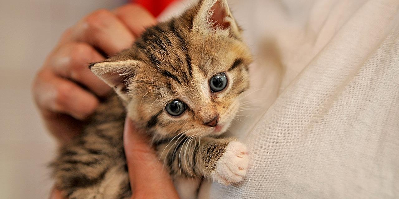Löytöeläimet, erityisesti kodittomat kissat, ovat Suomessa iso eläinsuojeluongelma. Kuvassa pieni ruskearaidallinen kissanpentu ihmisen sylissä.