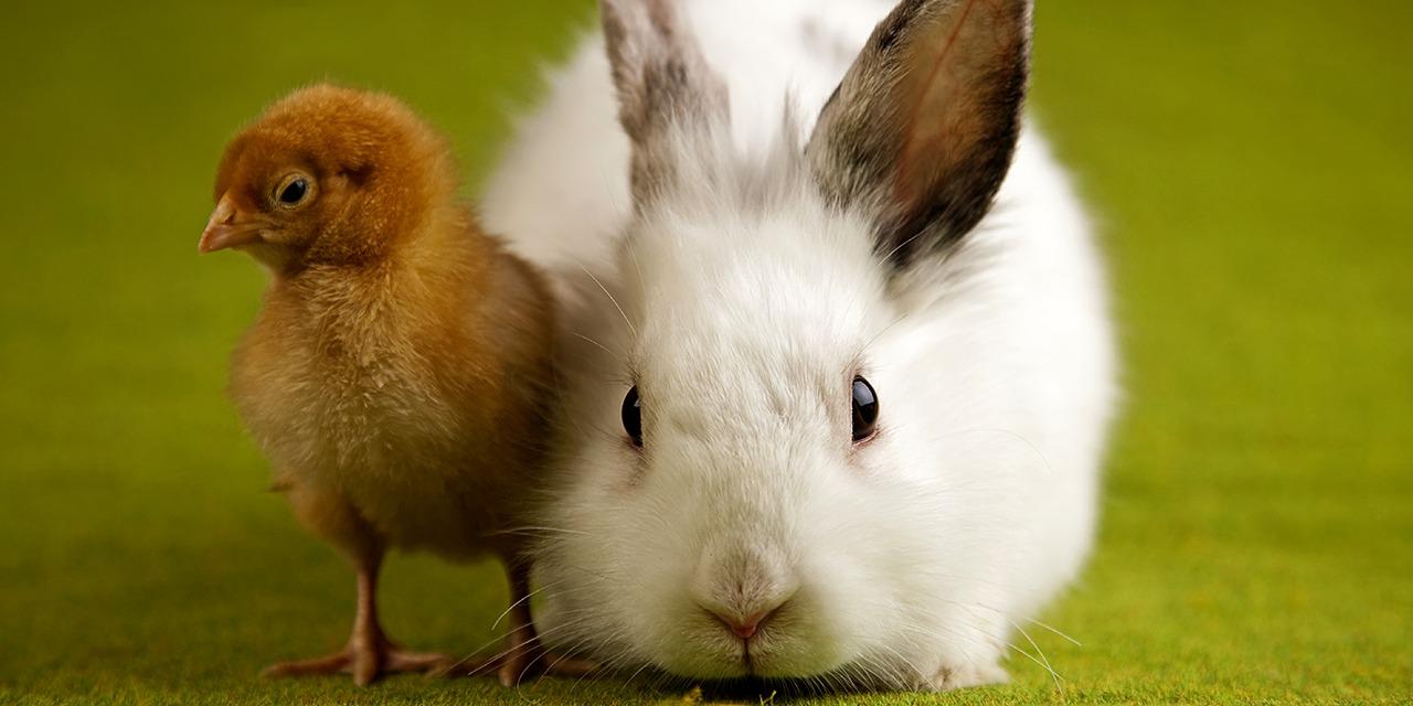 Eläinten viikolla nostamme yhteiskunnalliseen keskusteluun vaihtuvan ajankohtaisen eläinsuojeluteeman. Kuvassa rusehtava tipu sekä vaalea kani vihreällä taustalla.
