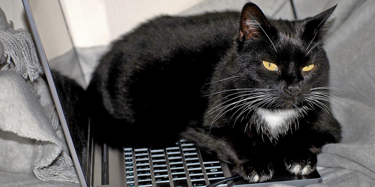 Netistä löytyy paljon epäilyttäviä ilmoituksia, jotka viittaavat esim. pentutehtailuun. Kuvassa musta keltasilmäinen kissa makoilee läppärin päällä.