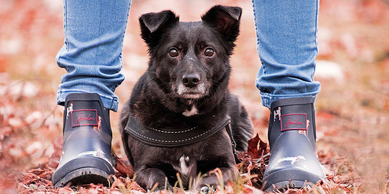 Mukavaa, että olet kiinnostunut eläinten auttamisesta! Voit opetella kanssamme eläinten hyvää hoitamista ja kohtelua. Kuvassa musta koira syksyisellä taustalla ihmisen jalkojen välissä.
