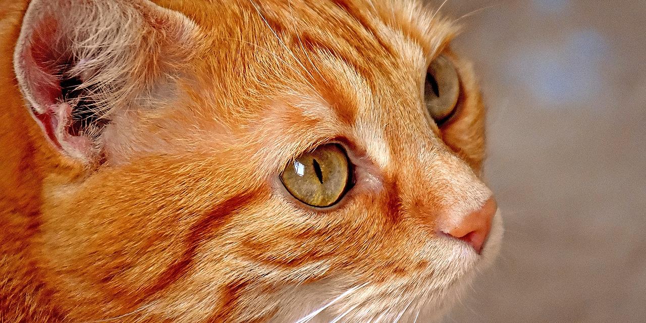 Päivätyökeräys eli taksvärkki tuo hauskaa piristystä kouluvuoteen. Sivukuva oranssista kissasta joka katsoo hieman ylöspäin.
