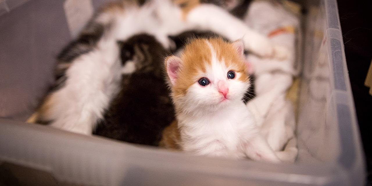 Löytöeläinten ja kodittomien eläinten määrä on saatu tiedotuksella ja eläinsuojelutoiminnalla jyrkkään laskuun, mutta yhä vieläkin löytöeläintaloihin jää vuosittain tuhansia eläimiä, joita kukaan ei hae takaisin kotiin. Kuvassa oranssivalkoinen pieni kissanpentu pyrkii ulos pentulaatikossa. Taustalla näkyy emo ja sisarukset.