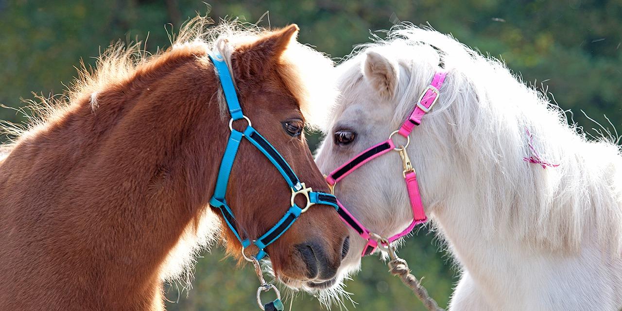 Tavoitteemme on, että kaikki eläimet voisivat hyvin yhteiskunnassamme. Kuvassa ruskea ja valkoinen poni kaulailevat.
