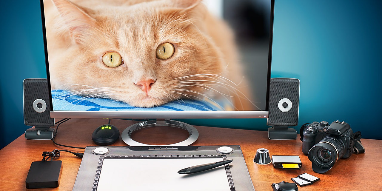 Meillä on ajoittain mahdollisuus tarjota työharjoittelupaikkoja esimerkiksi graafisen suunnittelun, nuorisotoiminnan ja markkinoinnin alalla. Myös pienimuotoiselle tutkimustyölle on tarvetta. Kuvassa piirtopöytä, järjestelmäkamera, sekä tietokoneen ruutu, jossa näkyy isokokoinen valokuva kermanvärisestä kissasta.