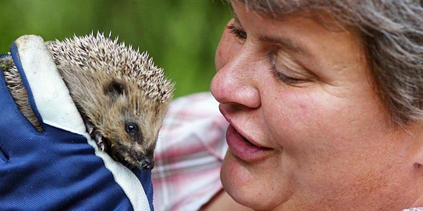SEYn vapaaehtoinen eläinsuojeluneuvoja on helposti lähestyttävä auttaja, kun epäilet ongelmia eläinten pidossa. Kuvassa pieni siili naisen sylissä.