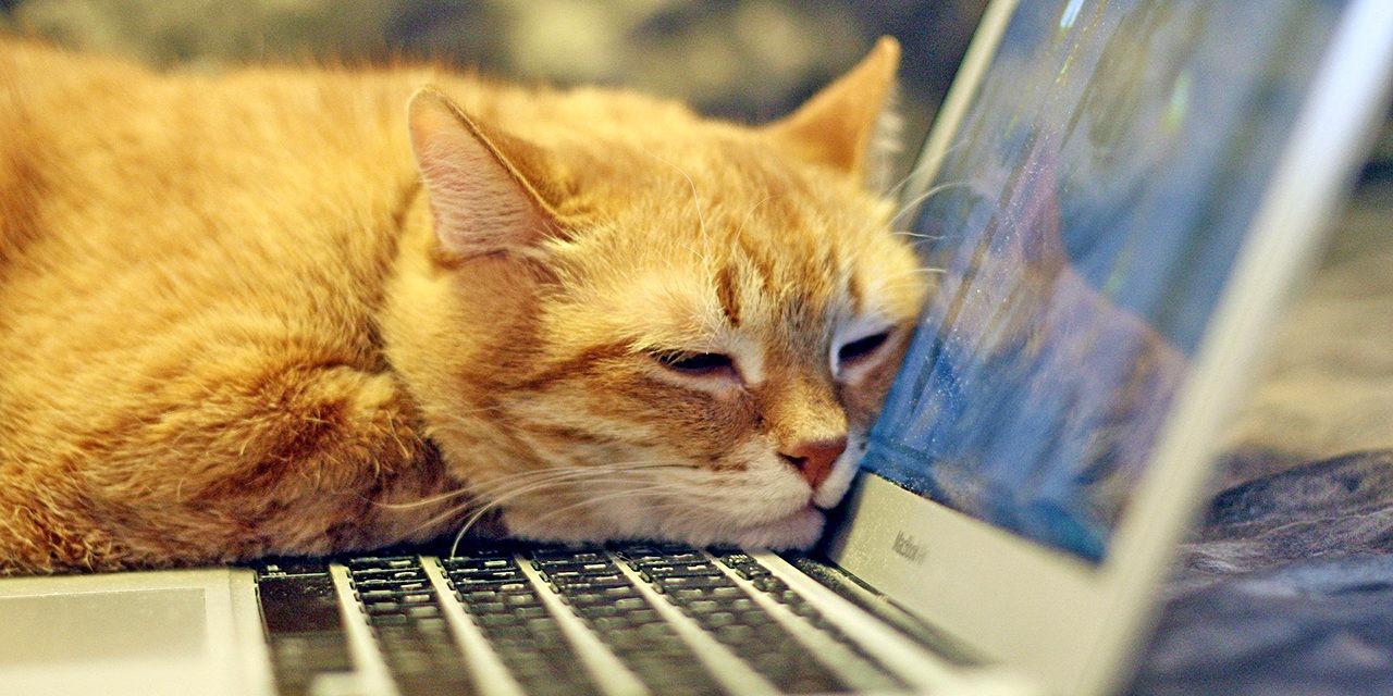 Somella eli sosiaalisella medialla tarkoitetaan erilaisia yhteisöpalveluja, kuten Facebookia, Twitteriä, Instagramia, Youtubea ja blogeja. Kuvassa oranssi kissa torkkuu kannettavan tietokoneen vieressä