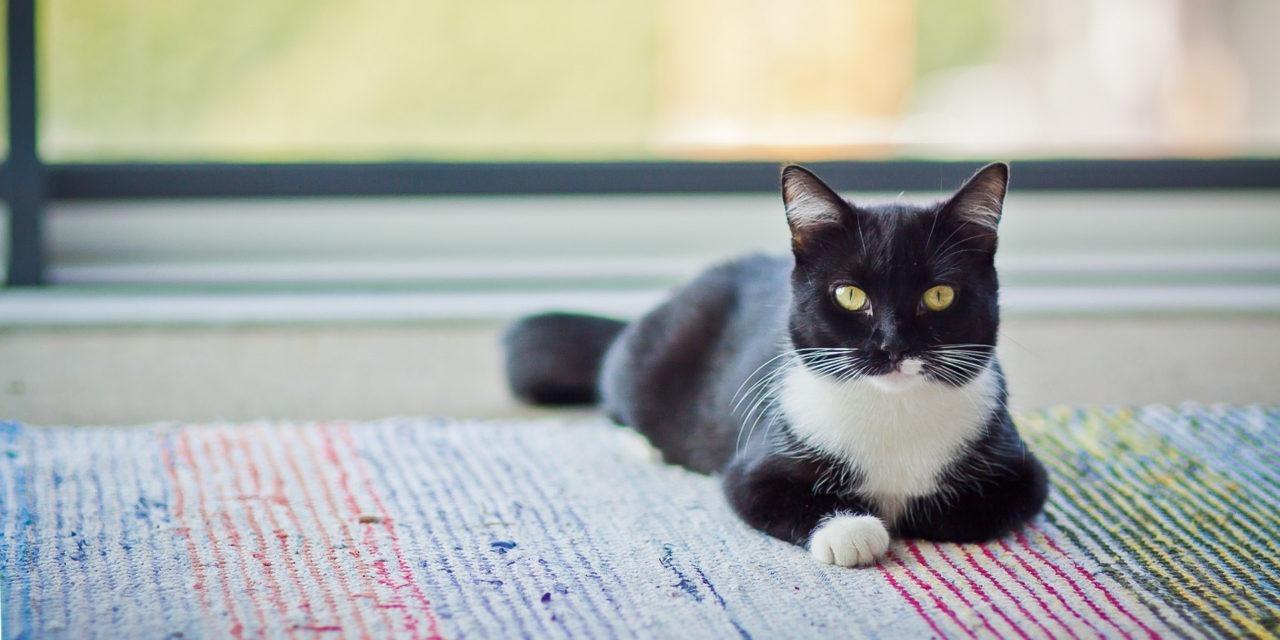 Mustavalkoinen kissa lepää kirjavalla räsymatolla.