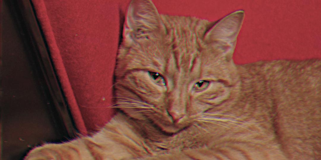 Punertavanraidallinen kissa makoilee kirkkaanpunaisessa nojatuolissa ja katsoo vienosti kulmien alta