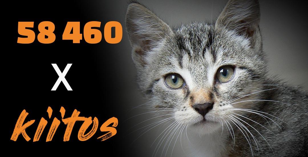"""Harmaaraidallinen kissanpentu katsoo kameraan. Lisäksi teksti """"58 460 x kiitos"""""""