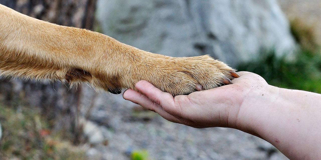 Vaaleanruskea koira laittaa tassunsa ihmisen kämmenelle