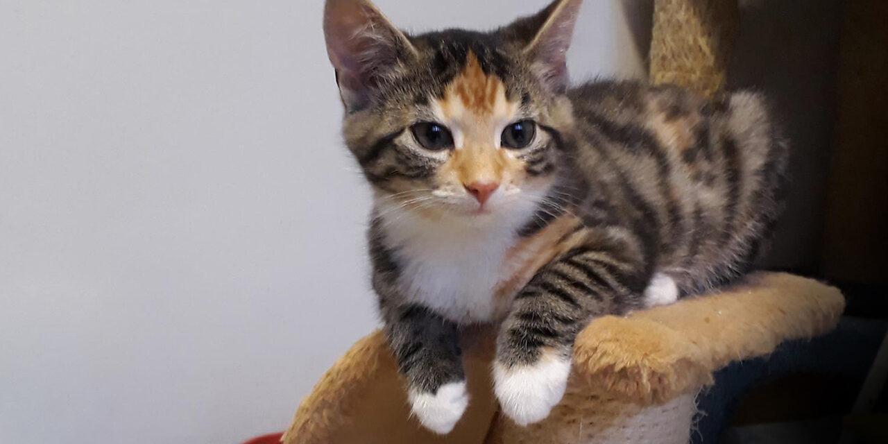 Kissa tarkkailee kiipeilypuusta makuuasenossa.