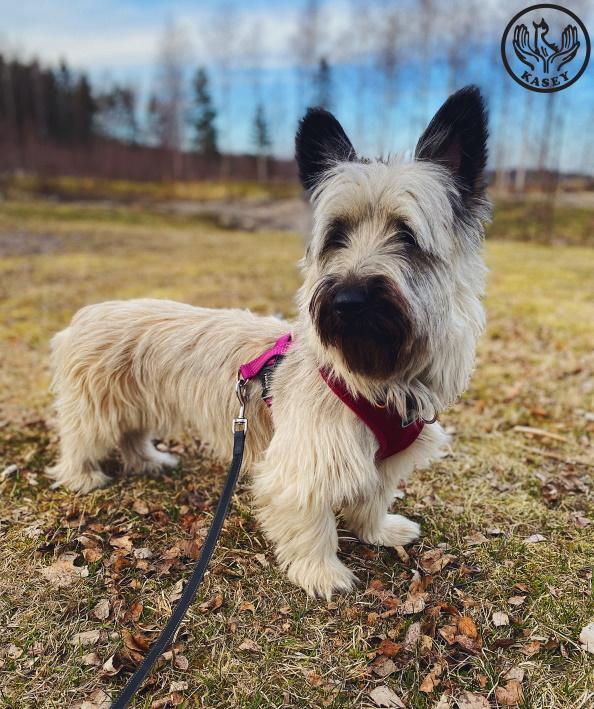 Kotia Etsivät Suomalaiset Koirat
